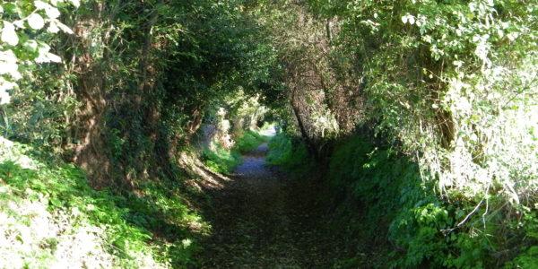 Chemin du Merle