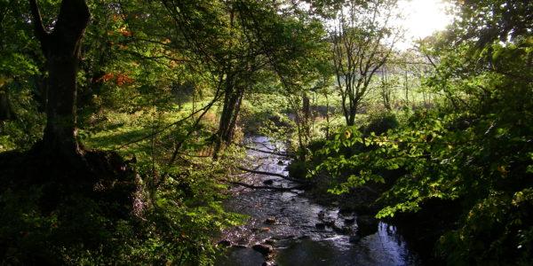 Le Boscq (chemin du vieux moulin)